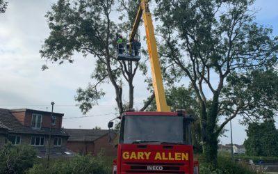 Ash tree removal in Bristol